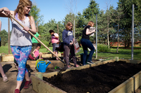 Photo of UIS students hoeing soil in raised beds at the UIS Community Garden.